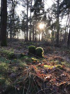 Leven van licht lezing zon